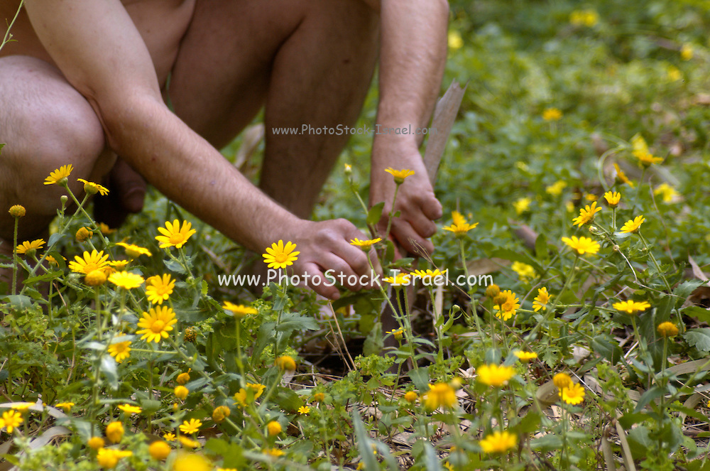 Back to nature, Nude man planting in a field of flowers, model aged 35, Model released