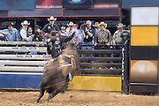 Sitting in the shark tank gives a great perspective at a PBR event.  I love the motion blur in this image. It shows the intensity and violence of the moment.