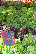 Street market merchant's stall with many different types of salads lettuce Sanary Var Cote d'Azur France