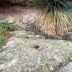 Grinding Stone, Boyce Thompson Arboretum