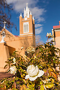 A white rose blooms outside the San Felipe de Neri Church historic adobe style Catholic church in the Old Town Plaza December 14, 2015 in Albuquerque, New Mexico.