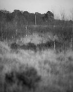 A telegraph pole in the distance on Whitmoor Common. Photograph by Andrew Tobin/Tobinators Ltd