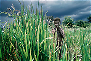 Young boy in a grain field clapping his hand to scare birds away- West Nile, Moyo District, Uganda.