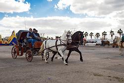 Ogni anno, il 26 Gennaio, a Porto Cesareo, località di mare vicino Lecce, si festeggia Sant' antonio Abate, protettore degli animali e specialmente dei cavalli. La sera viene accesa la grande focara alta 12 metri e costruita da due famiglie del posto. Quest' anno è stata la settantaquattresima edizione.<br /> <br /> Every year, January 26, in Porto Cesareo, a seaside resort near Lecce, celebrates Sant 'antonio Abate, patron saint of animals, especially horses. The evening is lit the great Focara 12 meters high and was built by two local families. This year 's edition was 74th