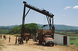 Sugar cane being loaded onto lorry,