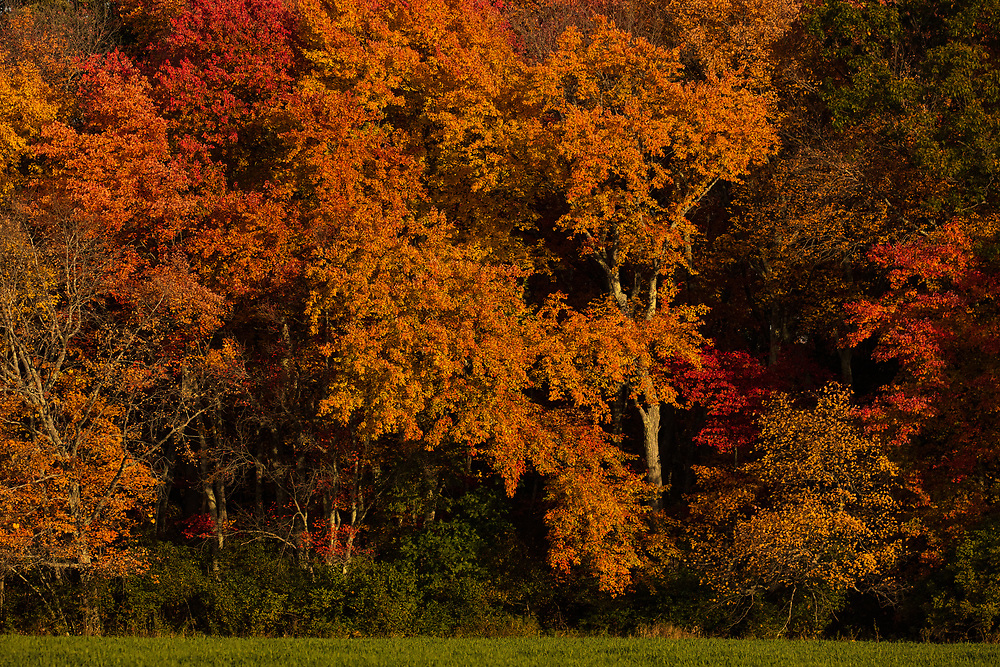 Autumn foliage in Concord, MA.