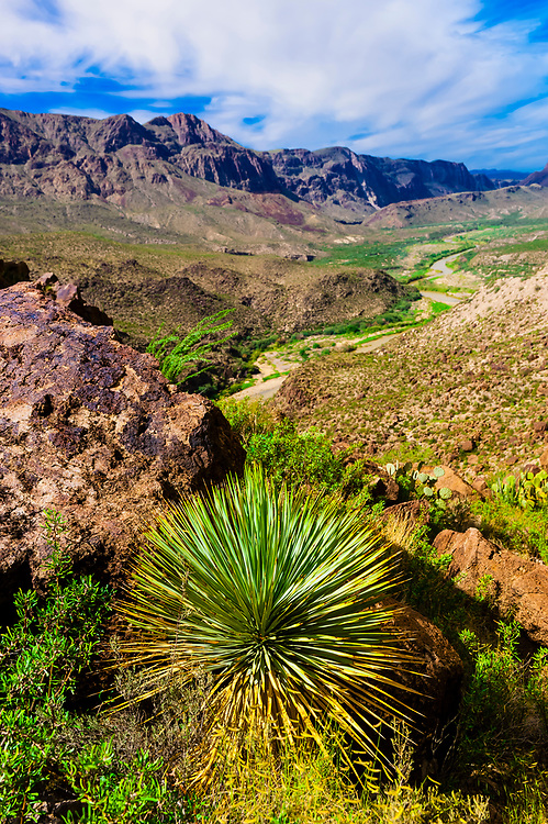 Yucca plant, the Camino del Rio (along the Rio Grande River, which is the border of the USA and Mexico. Mexico is in background), Big Bend Ranch State Park, Texas USA.