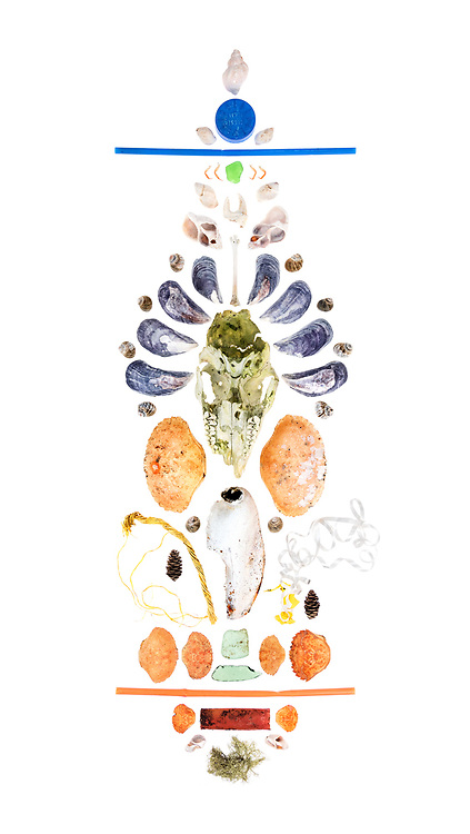 Top to bottom, left to right:<br /> Waved Whelk (Buccinum undatum), blue bottle top, 2 Dog Whelks (Nucella lapillus), blue plastic straw, 4 tiny crab legs, green sea glass, 2 Dog Whelks, crab claw, 2 broken Waved Whelks, bird leg bone, 8 Blue Mussels (Mytilus edulis), 8 Common Periwinkle (Littorina littorea), juvenile White-tailed Deer skull (Odocoileus virgininus), Jonah Crab (Cancer borealis), Rock Crab (Cancer irroratus), lobster claw (Homarus americanus), 2 Common Periwinkle, lobster trap rope, balloon and ribbon, spruce cones (Picea sp.), Rock Crab, Jonah Crab, sea glass, Jonah Crab, Green Crab (Carcinus maenas), orange plastic straw, 2 green crabs, shotgun cartridge, 2 broken Dog Whelks, Old Man's Beard lichen (Usnea sp.)