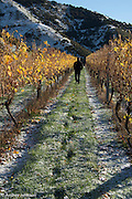 Stuart Dudley's footsteps in a fresh coating of snow, Villa Maria, Marlborough, New Zealand