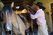 Brazilian male Gaucho cowboy saddling up his horse in a stable. Working Gaucho Fazenda in Rio Grande do Sul, Brazil.