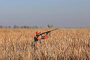 Pheasant Hunters Dressing Birds  in South Dakota