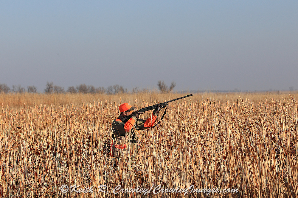 Pheasant Hunters Dressing Birds  in South Dakota