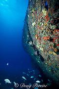 wreck of the Biscayne, Miami, Florida, USA ( Western Atlantic Ocean ) MR 67