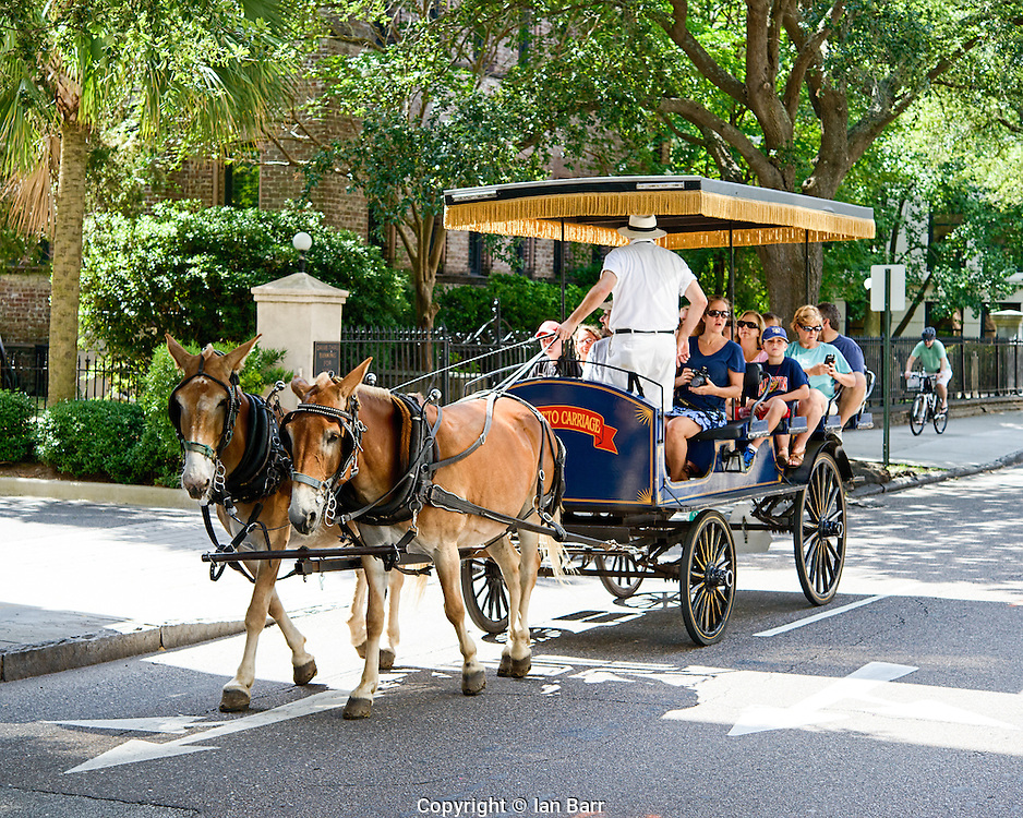 Carriage ride in Charleston,South Carolina, USA. Palmetto Carriage rides.