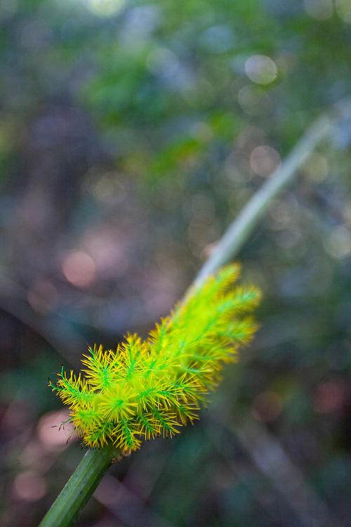 Parauapebas_PA, Brasil...Floresta Nacional dos Carajas, Para...The Carajas National forest , Para. ..Foto: JOAO MARCOS ROSA / NITRO