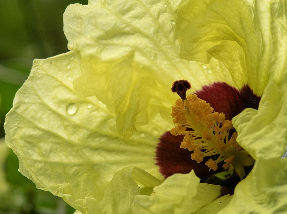 Hibiscus Grotto