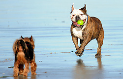 SOUTH AFRICA - Cape Town - 04 June 2020 - Dogs having fun on Strand beach. Picture:Brendan Magaar/African News Agency (ANA)