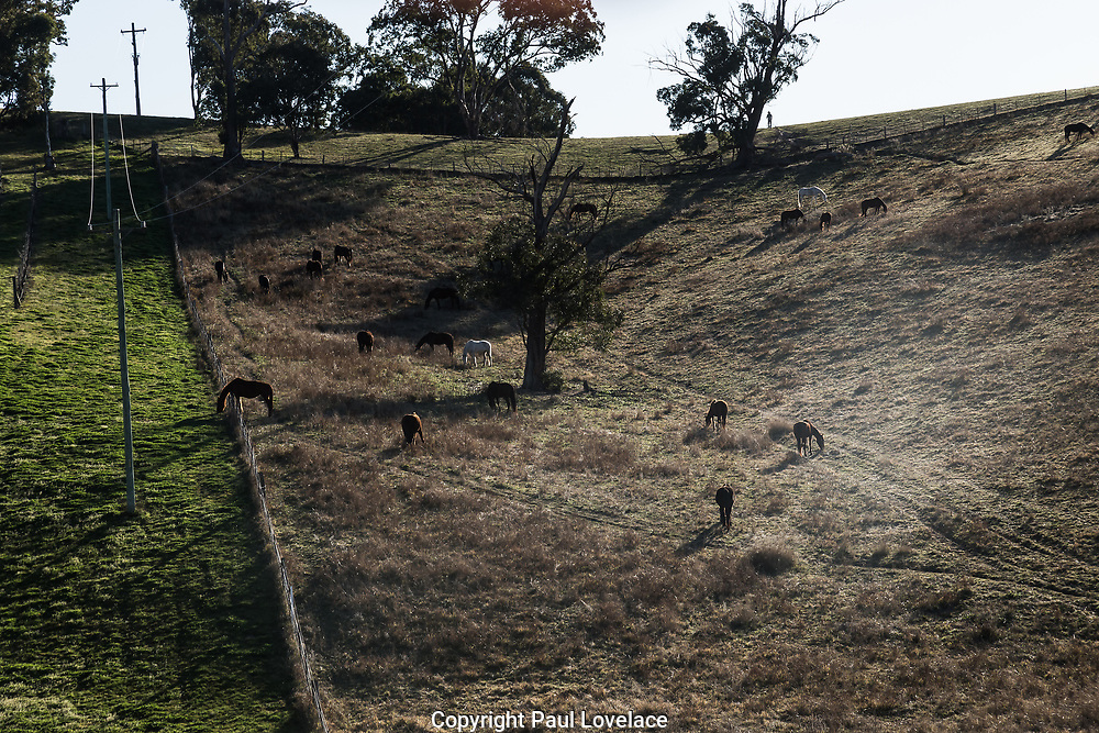 Sydney, Australia. Saturday 1st August 2020. Horses grazing next to the Megalong Creek Estate, Blue Mountains Winery, Megalong Valley, NSW.