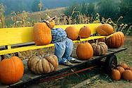 Fall Harvest display at Pumpkin patch, Goyettes Ranch Apple Farm, Camino Eldorado County, California