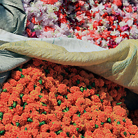 Asia, India, Calcutta. Cultivated marigolds are sold in the flower market as garlands for rituals, as well as for wedding decorations and floral arrangements.