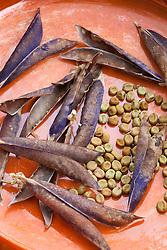 Purple podded peas in orange dish