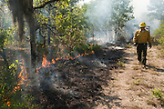 Prescribed Burn in longleaf pine forest.<br /> Brannon Walker Knight<br /> The Orianne Indigo Snake Preserve<br /> Telfair County, Georgia<br /> USA