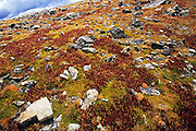 Autumn brings incredible color to the slopes of South Arapaho Peak, in the Indian Peaks Wilderness area, Colorado.