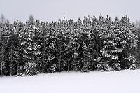 Puszcza Knyszynska, 14.01.2021. Obfite opady sniegu i znaczy spadek temperatury na Podlasiu. N/z osniezone drzewa w Puszczy Knyszynskiej fot Michal Kosc / AGENCJA WSCHOD