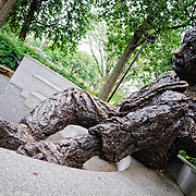 Albert Einstein Memorial bronze statue in Washington DC