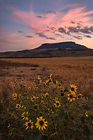 It was another beautiful Montana sunset near Square Butte. Roadside wildflowers provided extra color.