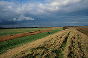 AE2BYF Marshland scenery reclaimed land Suffolk Sandlings near Boyton England