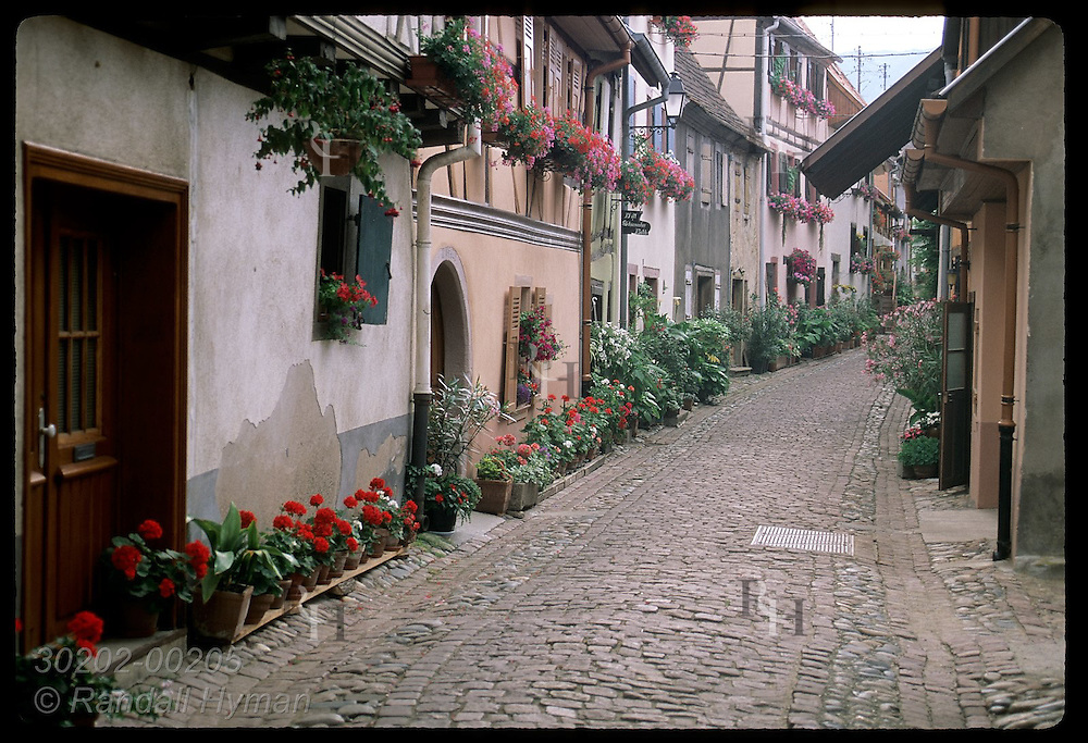 Flowers adorn the facades of half-timbered homes on cobblestone street; (h) Eguisheim, Alsace. France