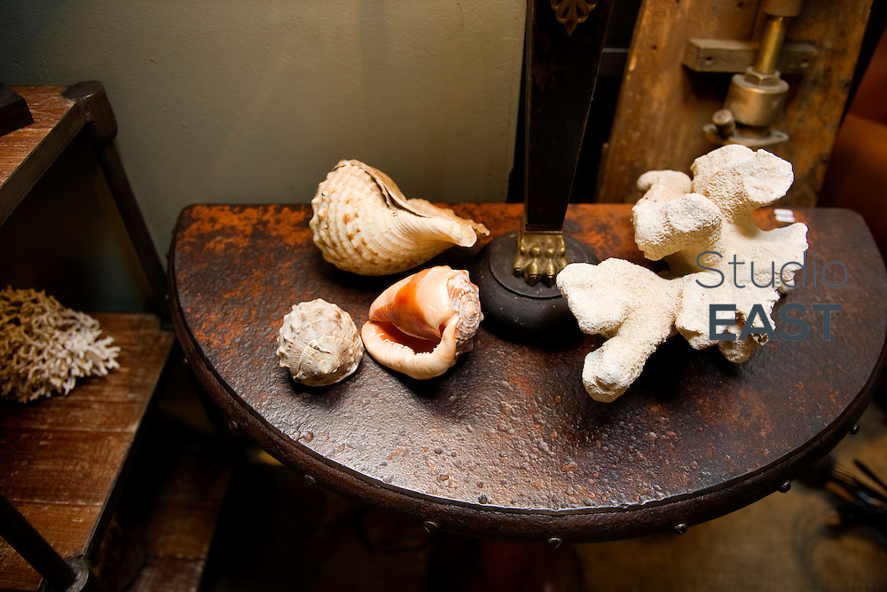 PARIS, FRANCE - FEBRUARY 08: Shells and corals in Saint-Ouen flea market, on February 8, 2014, outside Paris, France. The Paris Flea Market (Le Marche aux Puces) opened in 1885. Located in a popular district, it extends over six hectares in Saint-Ouen, a city near Paris. The Paris Flea Market is a famous Paris shopping venue attracting 70 000 shoppers every week. (Photo by Lucas Schifres/Getty Images)