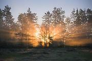 "Sun-rays breaks through the fog and a narrow patch of trees in bog of Ance, nature reserve ""Ances purvi un meži"", Latvia Ⓒ Davis Ulands   davisulands.com"