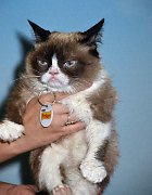 Internet Sensation Grumpy Cat at The Friskies Create & Taste Kitchen in New York City, NY, USA, August 19, 2015. Photo by MM/ABACAPRESS.COM  Chats Chat Cat Cats  | 512637_007 New York City Etats-Unis United States