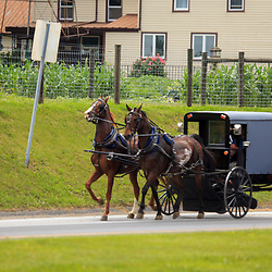 An Amish Buggy with two horses