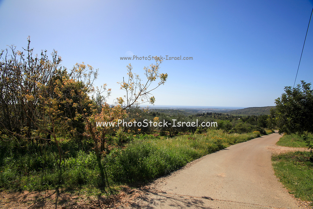 natural Israeli landscape. Photographed in Israel in February