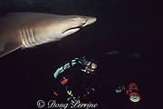 underwater photographer and sand tiger ( gray nurse ) shark, Carcharias taurus, Perth Aquarium, Western Australia