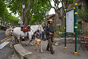 Traveller arriving into a village with his horse and dog, 17th May 2015, Lagrasse, France.