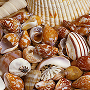 Close up of seashells. Mexico