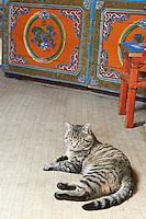 Mongolie, province de Tov, chat dans une yourte // Mongolia, Tov province, cat inside a yurt