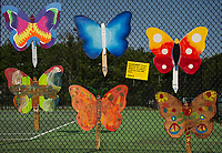 Butterflies made at the Gilford Community Center hang on the tennis court fence for voting during Gilford Old Home Day festivities Saturday afternoon.  (Karen Bobotas/for the Laconia Daily Sun)