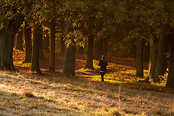 Hampstead Heath, London, October 28th 2014. A jogger runs through the early morning sunlight on Hampstead Heath.