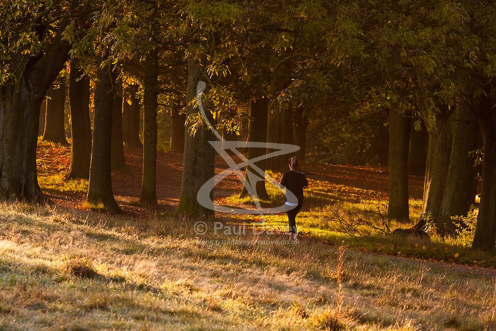 Hampstead Heath, London, October 28th 2014. A jogger runs through the early morning sunlight on Hampstead Heath.
