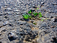 Closeup view of green broken glass pieces on pavement. WATERMARKS WILL NOT APPEAR ON PRINTS OR LICENSED IMAGES.