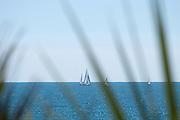 Gylly Beach sail and palms 03
