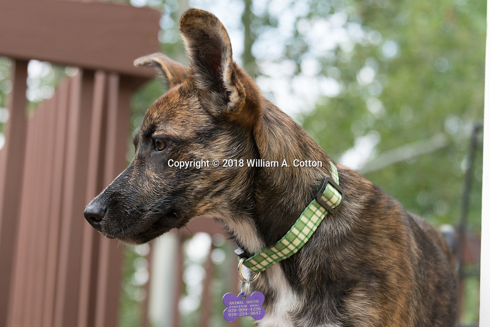 Gwen, from Animal House Rescue and Grooming explores the backyard, August 17, 2018.