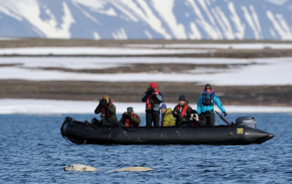 Ecotourists photographing Polar Bear, Ursus maritimus, swiming, Svalbard, Norway