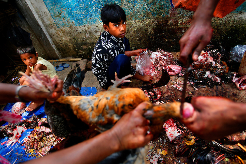 Uzzal, 12, slaughters chicken in Dhaka, Bangladesh. He has been working for 5 years and earns 30tks a day. (70tks=us1d).