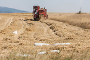 July 13, 2013 - Gjilan, Kosovo - Harvest is the process of gathering mature crops from the fields. Reaping is the cutting of grain or pulse for harvest, typically using ascythe, sickle, or reaper. .The harvest marks the end of the growing season, or the growing cycle for a particular crop, and social importance of this event makes it the focus of seasonal celebrations such as a harvest festival, found in many religions. (Credit Image: © Vedat Xhymshiti/ZUMAPRESS.com)